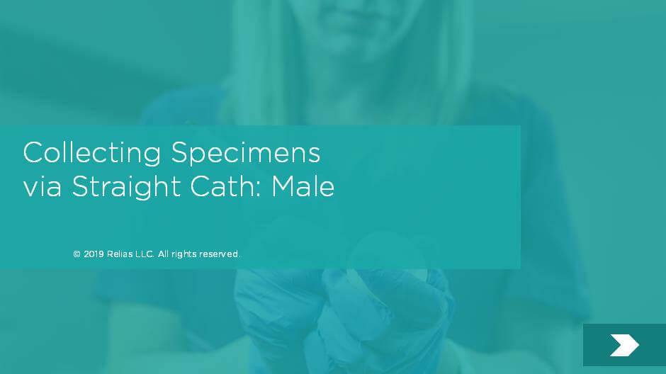 Collecting Specimens via Straight Cath: Male