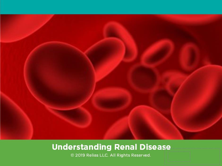 Understanding Renal Disease